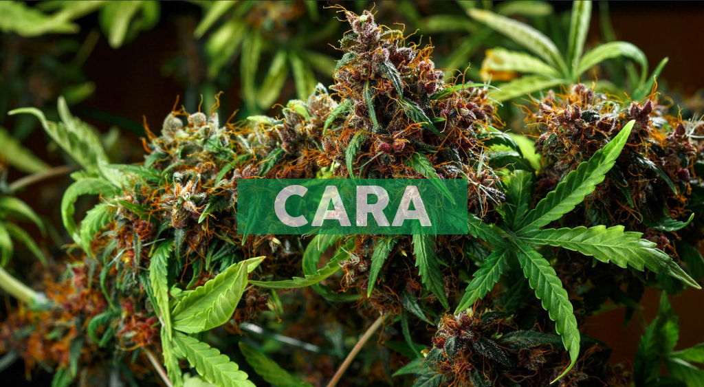 Cara Therapeutics to Announce Third Quarter 2020 Financial Results on November 9, 2020