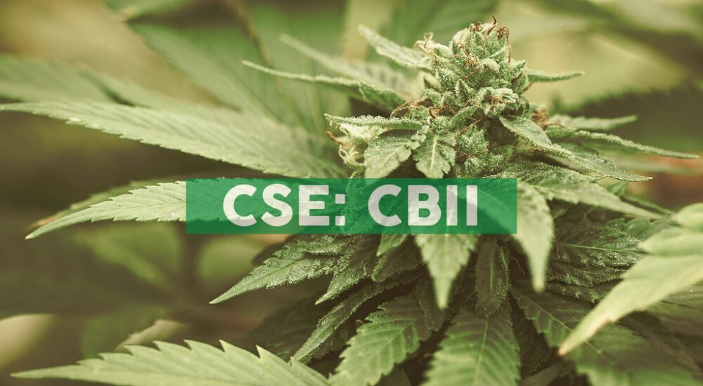CB2 Insights Announces Results of Special Shareholders Meeting and Schedule for Q3 2020 Earnings Call