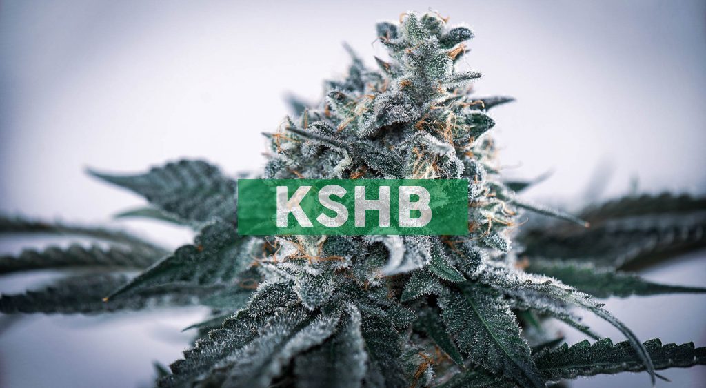 """KushCo Holdings Partners With the Weldon Project's """"Project Mission Green"""" to Fight Social Injustice and Provide Relief for Victims of the War on Drugs"""