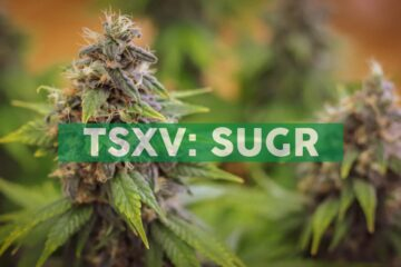 Sugarbud Announces Filing of Q3 2020 Financial and Operating Results
