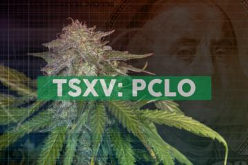 PharmaCielo to Participate in 2020 Cowen Boston Cannabis Conference