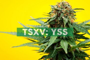YSS Corp. Agrees to Indicative Terms for $4.0 Million Credit Facility