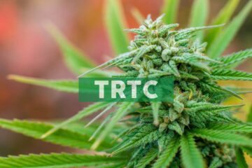 Terra Tech Corp. Announces Changes to Leadership Team