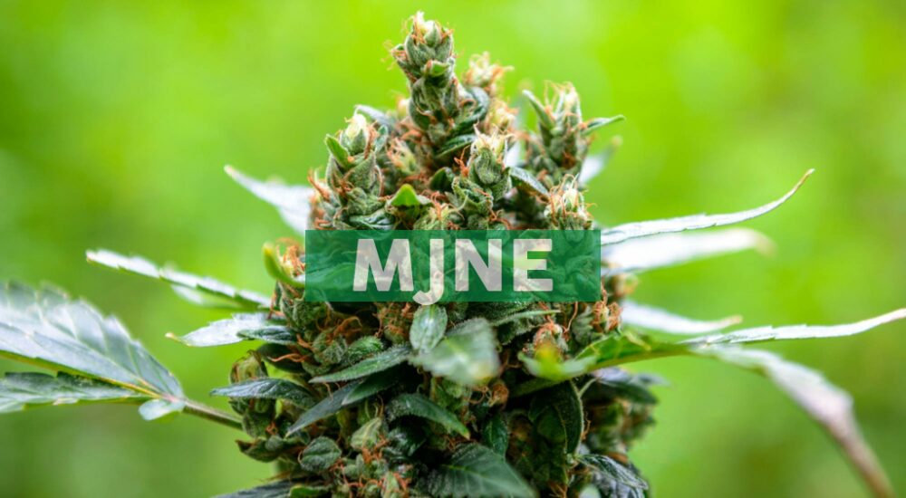 MJ Holdings, Inc. Announces the Execution of a Letter of Intent to Acquire Cultivation and Production Licenses