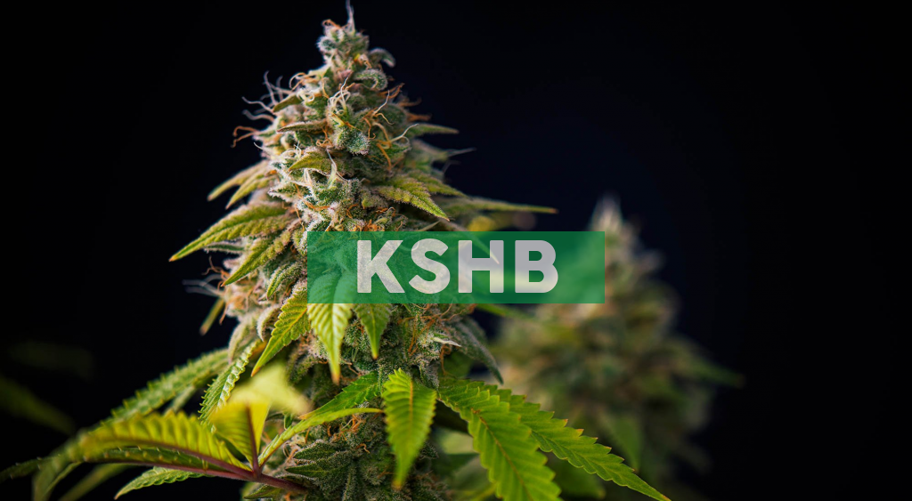 KushCo Holdings to Report Fiscal First Quarter 2021 Financial Results on Monday, January 11, 2021