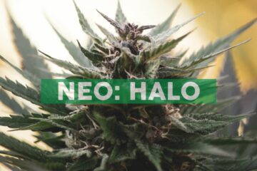Halo Signs Definitive Agreement to Acquire two Additional LA Dispensary License Applicants and is on Track to Open First Ever Flowershop™ Dispensary in Partnership with G-Eazy