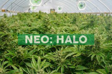 Halo Provides Update On 1600 Acre California Farm