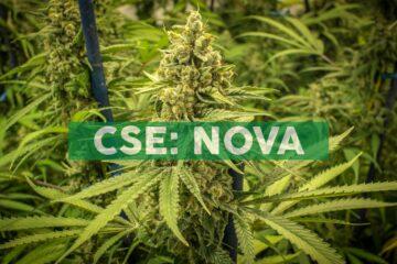 Nova Mentis Psilocybin Approved for Shipment to Italy