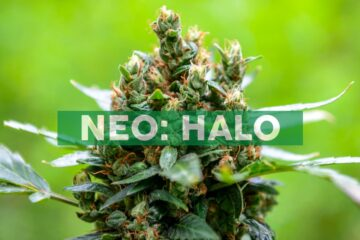 Halo Collective Signs Definitive Agreement with Nature's Best Resources LLC