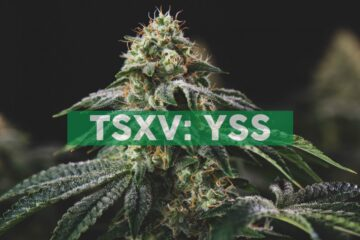 YSS Corp. Announces Receipt of Shareholder Approval of Reverse Takeover
