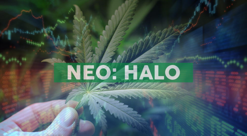 Halo Collective Announces New Appointment to Board of Directors and Completes Securities Issuance to Independent Consultants, Related Parties, and Suppliers