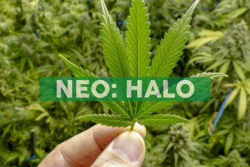 """Halo Collective Announces Appointment of Ryan Kunkel, CEO, and Founder of Cannabis Retailer """"Have a Heart"""" as Vice Chairman and a Director"""