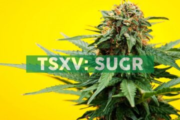 Sugarbud Announces Timing of Initial Product Shipments to Ontario