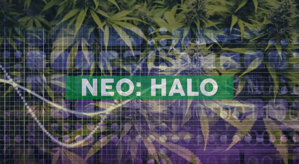 Halo Collective Inc. Reports Record Fourth Quarter and Full Year 2020 Results; Gives 2021 Guidance