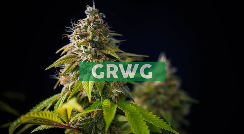 GrowGeneration Reports Record First Quarter 2021 Financial Results and Raises Full-Year 2021 Guidance