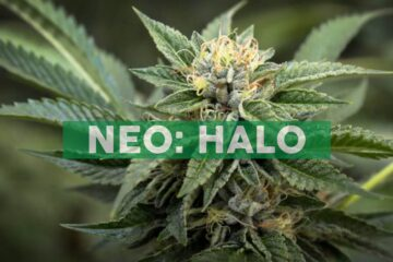 Halo Collective Announces Reorganization of International Assets to Create Akanda, a Leading African Medical Cannabis Company