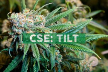 TILT Reaches Agreement with Massachusetts Cannabis Control Commission