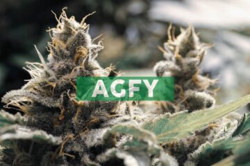 Agrify Enters into Multi-Year Vertical Farming Research and Development Partnership with Curaleaf