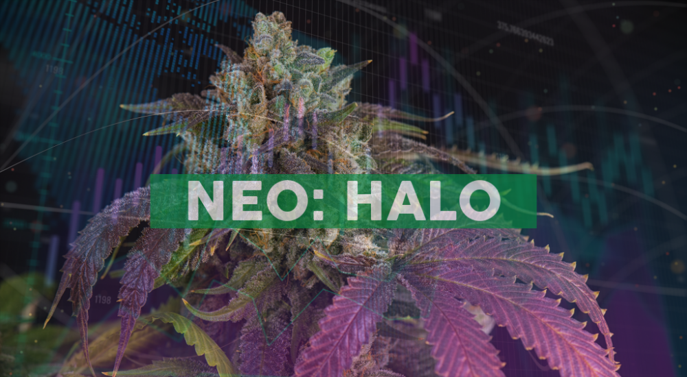 Halo Collective Announces Official Launch of Two Premium Cannabis Strains in Oregon with DNA Genetics